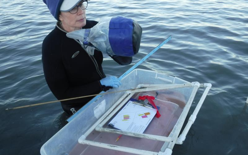 Researcher collecting samples in water at the San Francisco Bay MarineGEO site