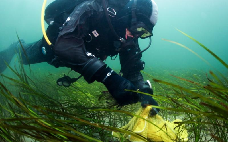 diver-in-seagrass.jpg
