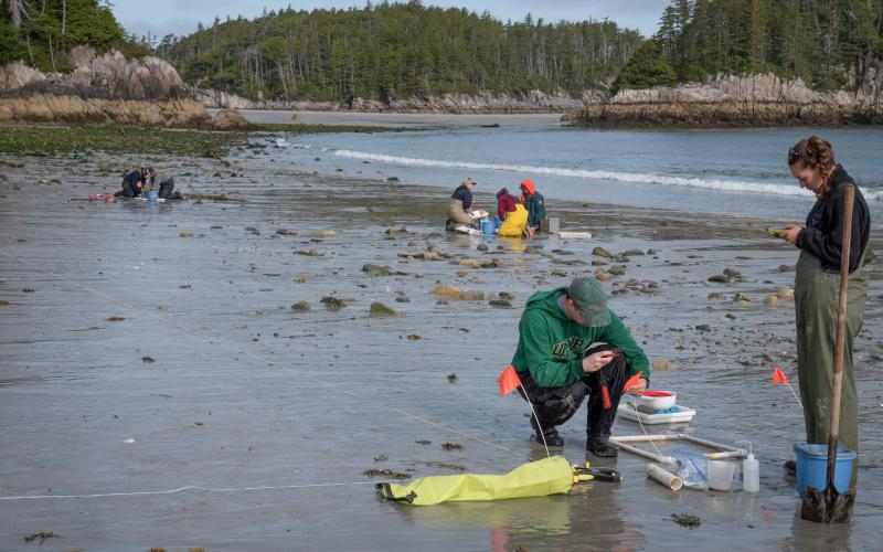 intertidal-sampling.jpg