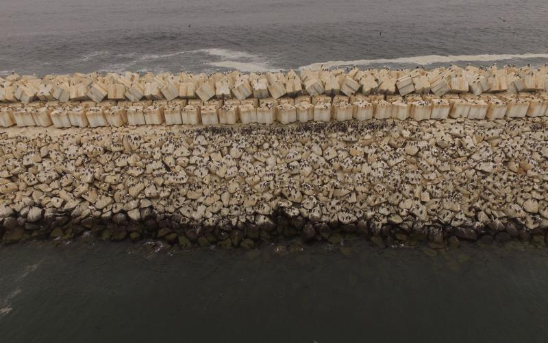 Lots of birds sitting on a breakwater in Peru