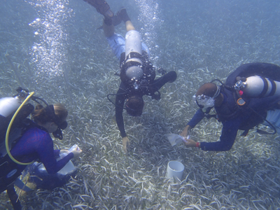 taking seagrass samples.jpg